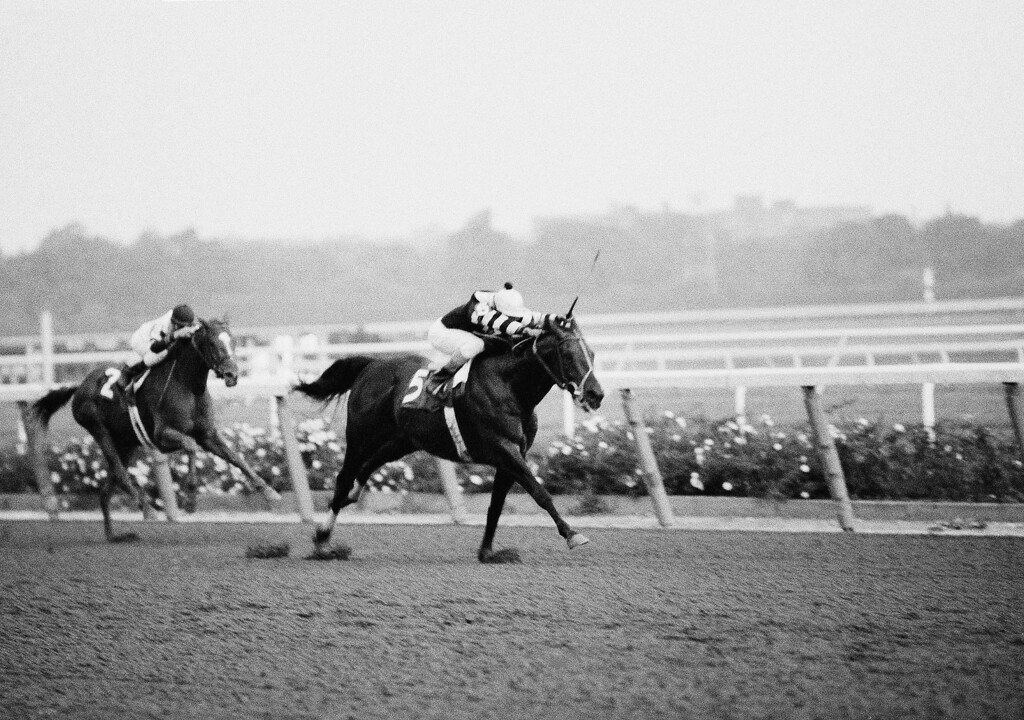 . 1977:  SEATTLE SLEW - Jockey Angel Cordero urges Seattle Slew (5) down the final stretch at New York\'s Belmont Park.