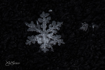 Snowflakes Winter 2019