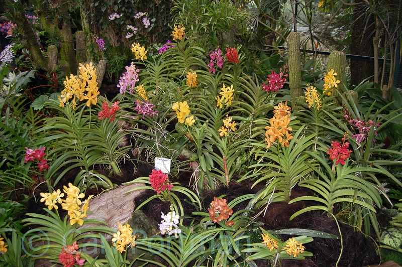 National Orchid Gardens (23).jpg