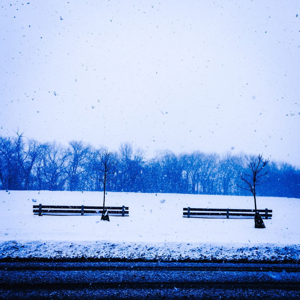 Park benches and trees, falling snow. Columbus Park, Chicago, Illinois.<br /> IMG_3288