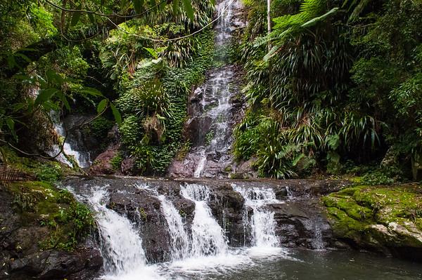 2013 - O'Reilly's Rainforest Retreat