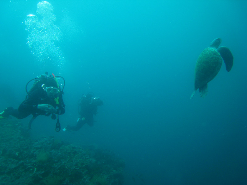 Diving in the Galapagos (37 of 392)