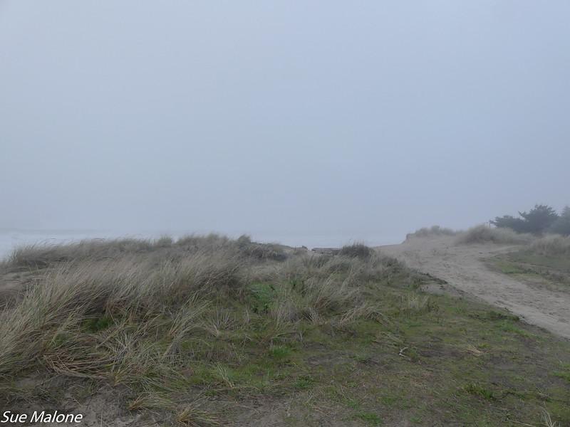 01-15-2021 Foggy Day at Bastendorff (2 of 2).jpg