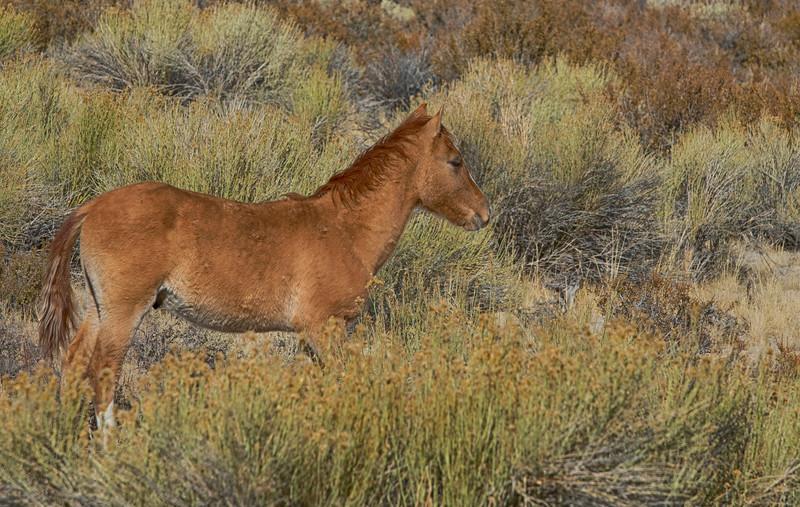 Horses7.jpg