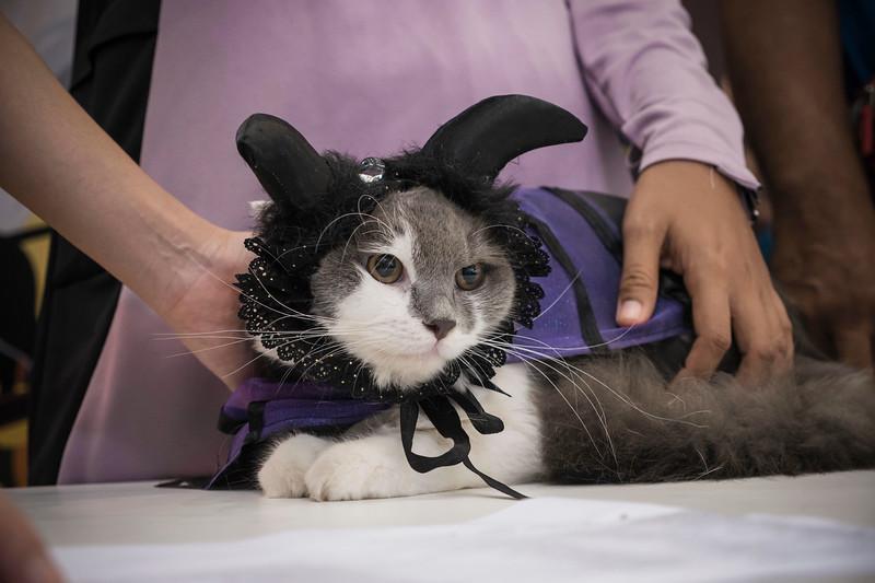 VividSnaps-The-Seletar-Mall-CAT-Dress-Up-Contest-240.jpg