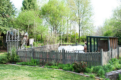 The finished coop and view of the garden and flower beds.
