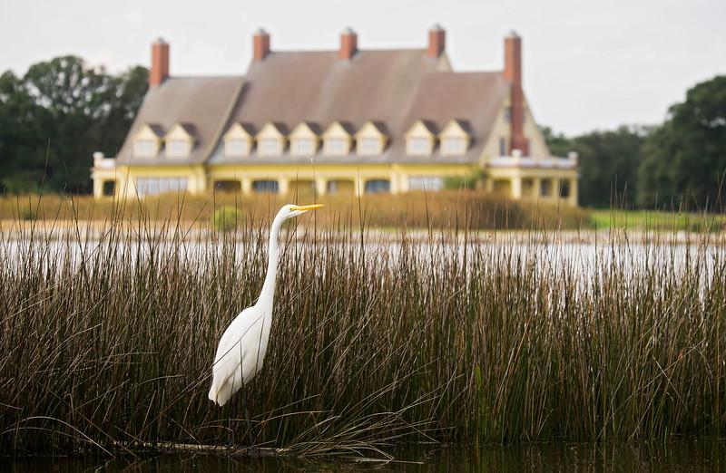 Egret at the Whalehead Club