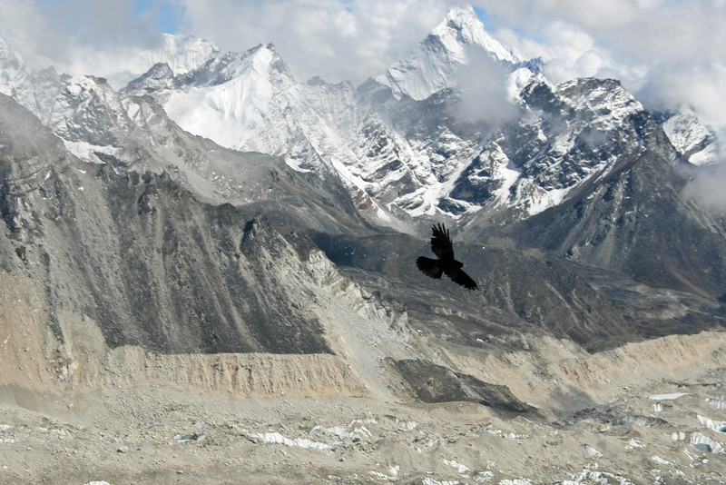 A crow flies over the Khumbu Glacier