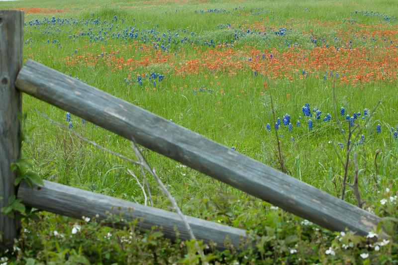 2015_4_3 Texas Wildflowers-7711.jpg
