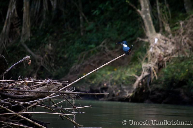 Costa Rica 315.jpg