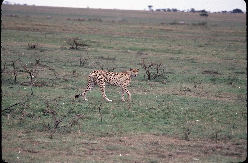 Kenya2_038.jpg