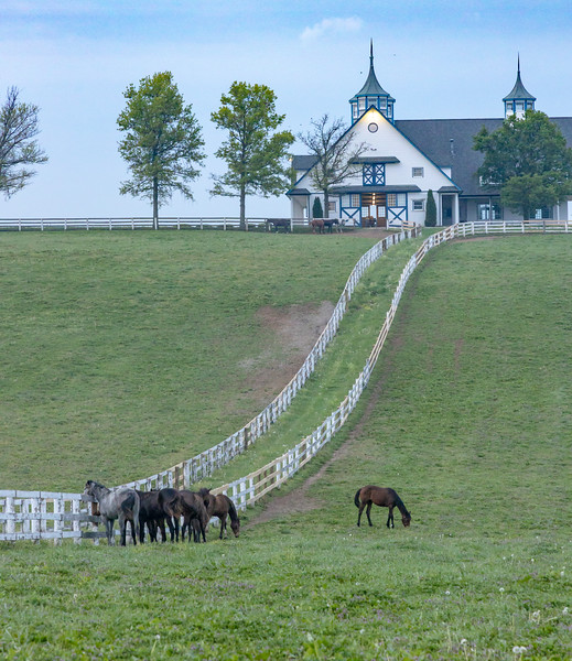 Manchester Horse Farm Lexington KY  April 25, 2019   014.jpg