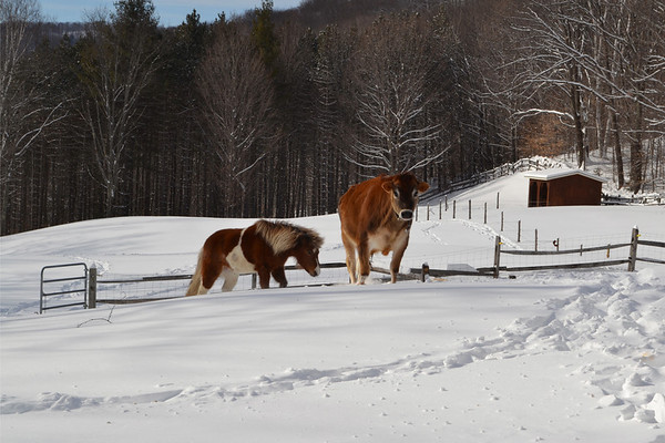 NEMO Winter Storm Photos