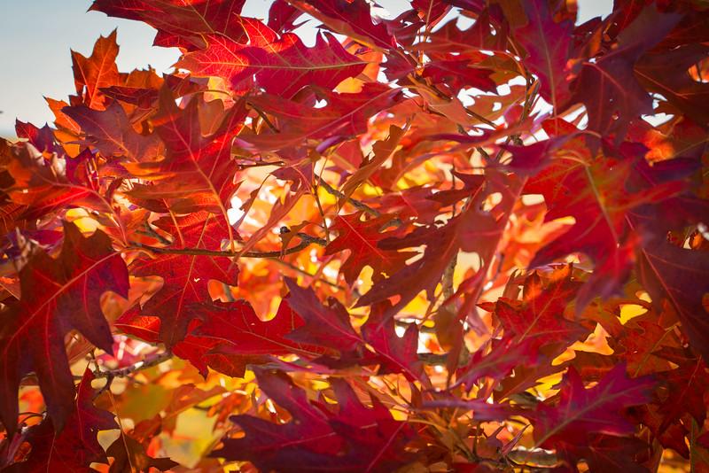 20151024-Fall Colors-80.jpg