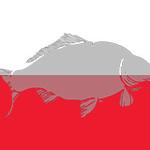 WCC-flag-Poland-240x160.jpg