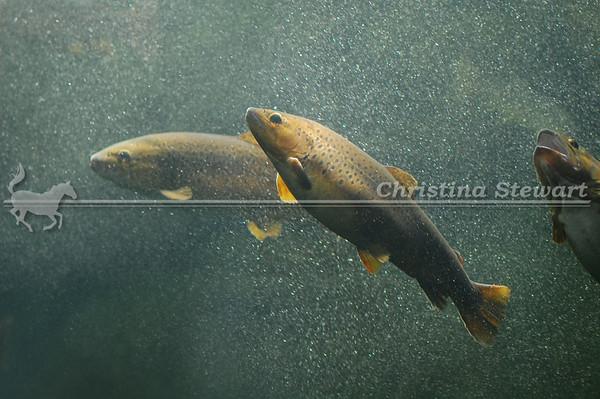 Tennessee Aquarium 2012