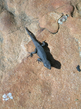 Lizards, Insects & Tortoises