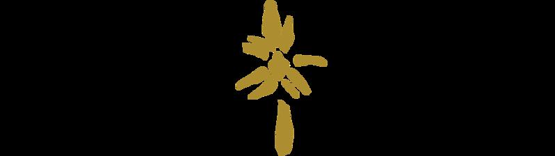 TD Logo V6.png