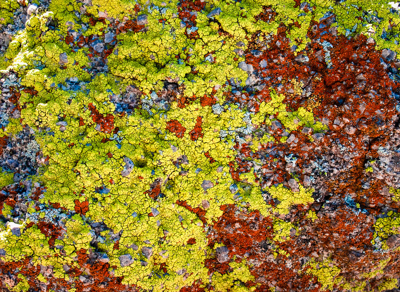Lichen, Buckeye, Arizona, 2004