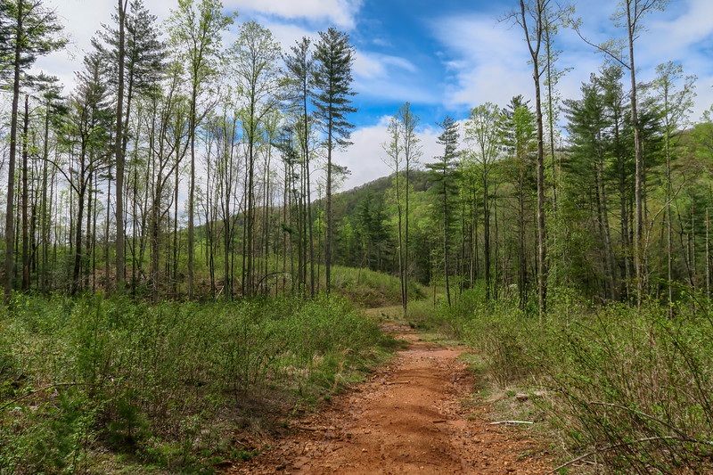 Foster Creek Trail, Henderson County (4-20-19)