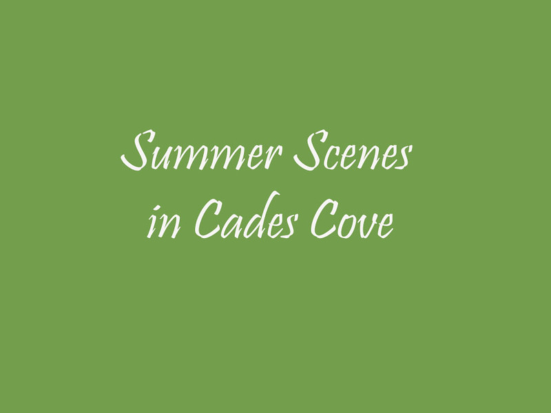 summertime in cades cove video.mp4