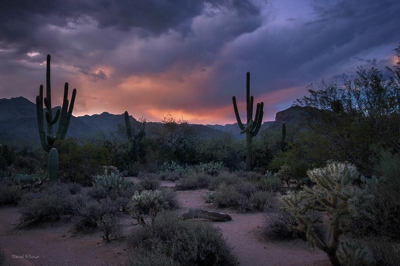 Desert Symphony