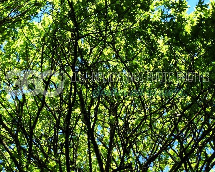 Forest Canopy-02_batch_batch.jpg