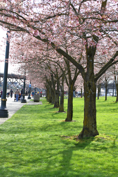 PDX MARCH 24, 2012  4178.png