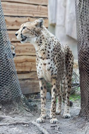 5.7.15 Milwaukee County Zoo