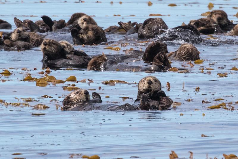 Alaska 2015 - Sitka -  072515-011.jpg