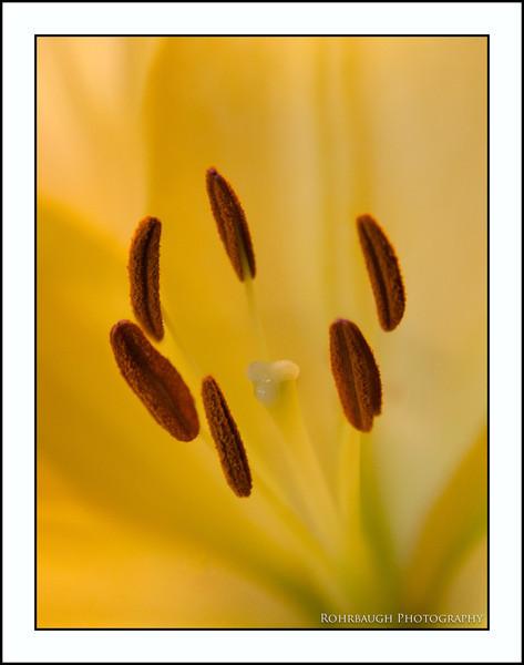 Rohrbaugh Photography Flowers 60.jpg