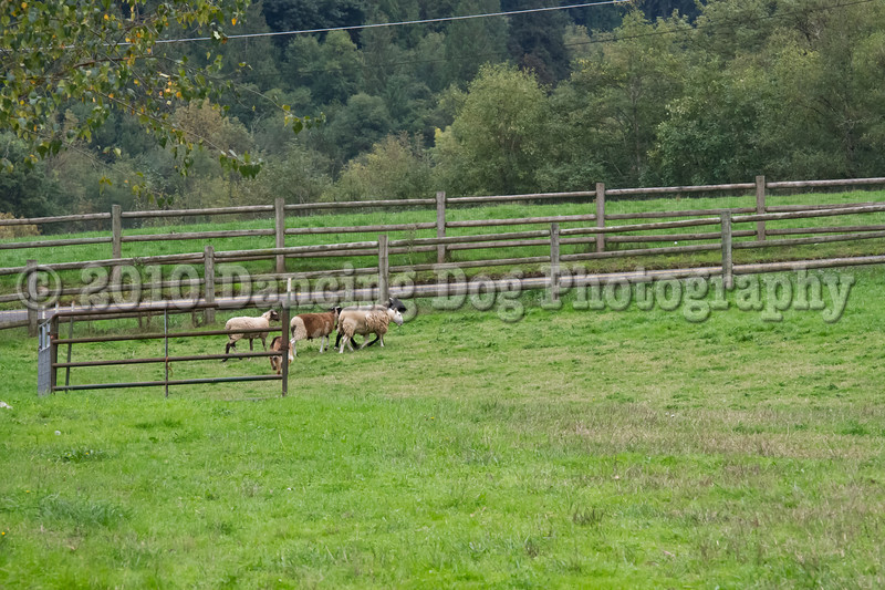 PacNW_HT_Sun_Sheep-6615