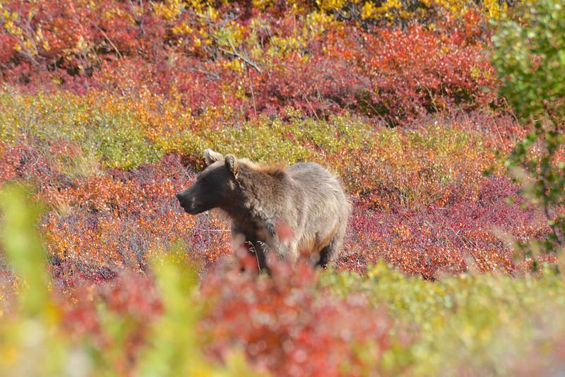 Alaska Fall 2013 - 157.jpg