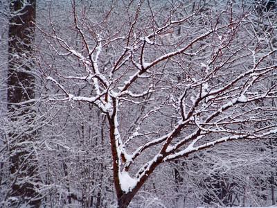 Winter Snow & Ice!