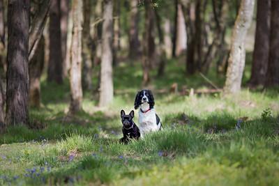 2018 - Dog portrait - Snerty & Fleur 001