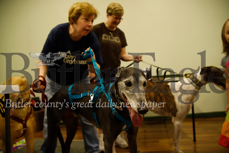 'Raphael' and his owner Teresa Canada, and other adopted dogs from Nittany Greyhounds greet guests at Saturday's Paws for Health event. Seb Foltz/Butler Eagle