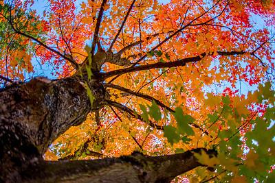 October Challenge: Autumn's Bounty
