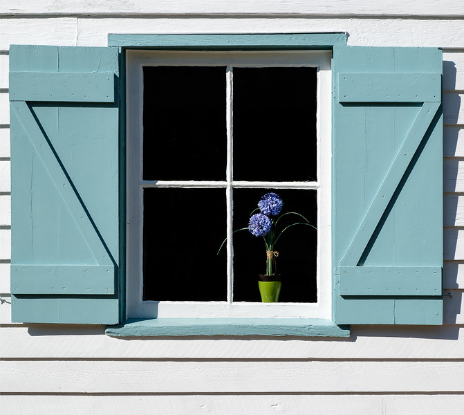 Teal Shuttered Window with Purple Flower