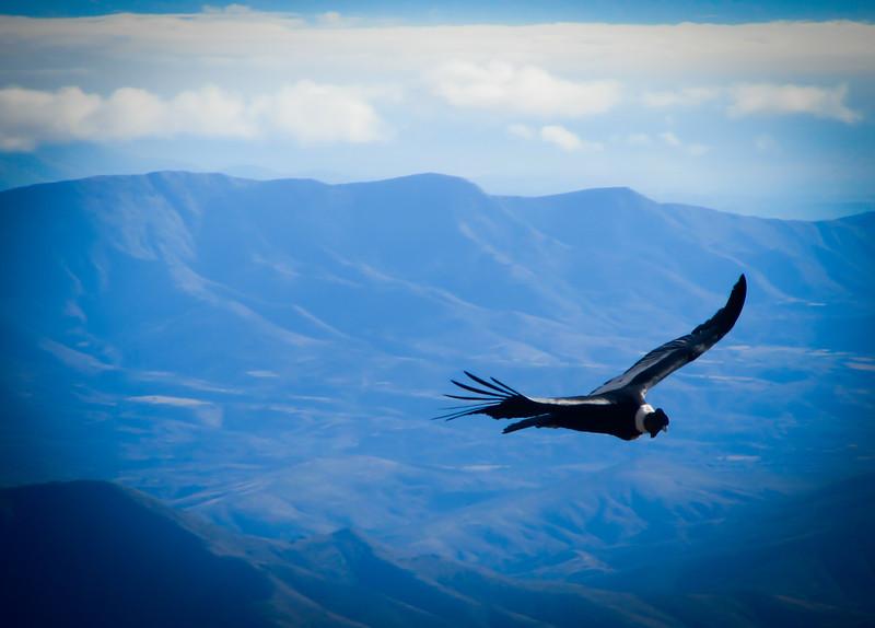 Tarija 201205 Valle de Los Condores (322c).jpg