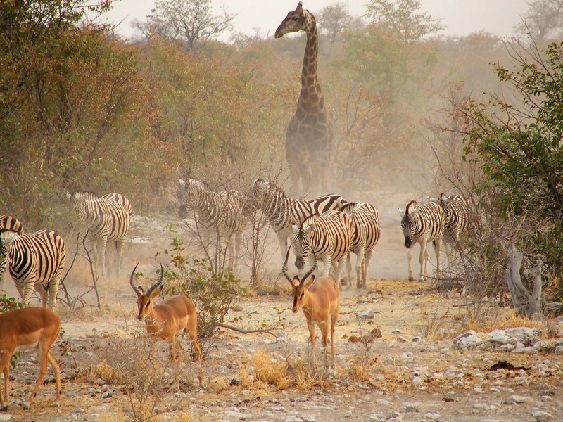 Namibia, Botswana & Zimbabwe