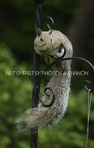 PHOTOS  of  SQUIRRELS,  CHIPMUNKS and the like