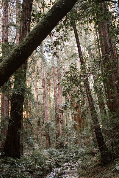 Forest_City_Photographs_Honeymoon_Califonia_San_francisco_Yosimite-43.jpg