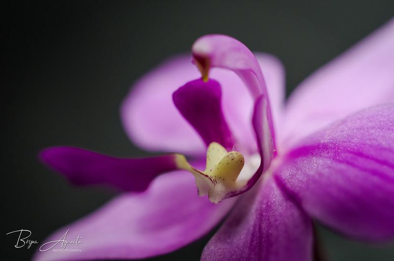 _DSC4434-Ground Orchid.jpg