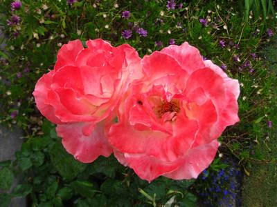 Grandma Driggs' Flowers