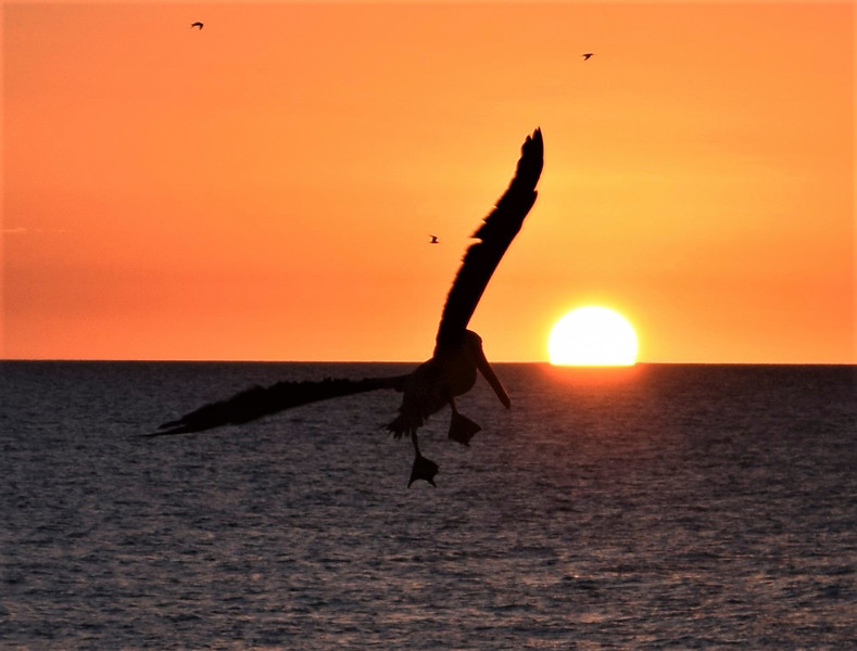 10_30_19 Clearwater Beach Sunset With Pelican.jpg