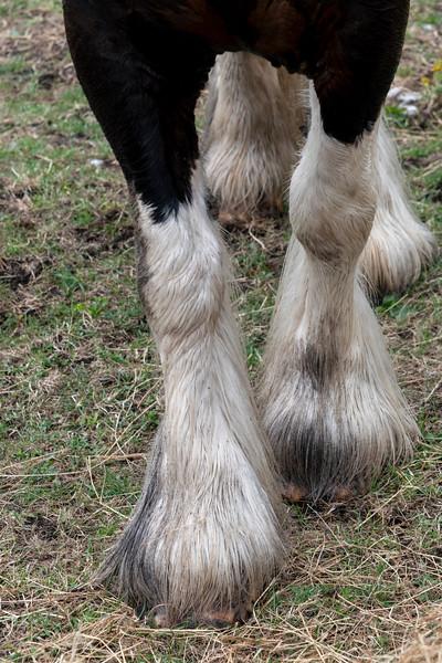 Close-up of the hoofs of a horse, Kilronan, Inishmore, Aran Islands, County Galway, Ireland