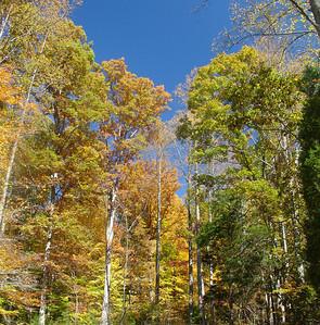 Fall at Watauga Lake