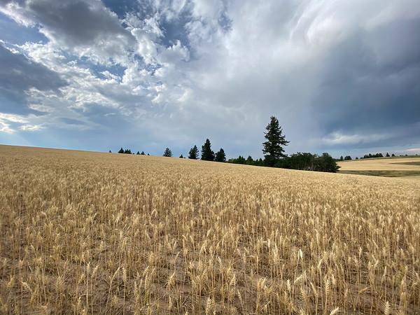 Felt, Idaho Property 2