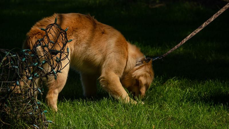 PuppyParty18-6.jpg