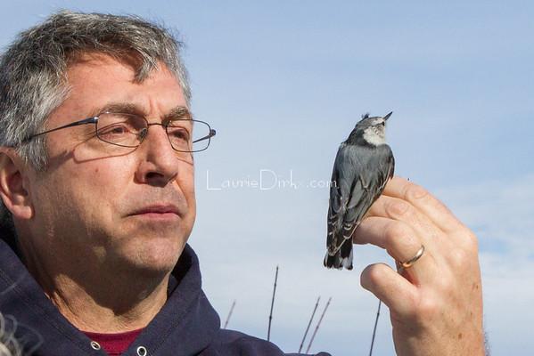 Bird Banding Education, John Van Niel, Montezuma Audubon Center
